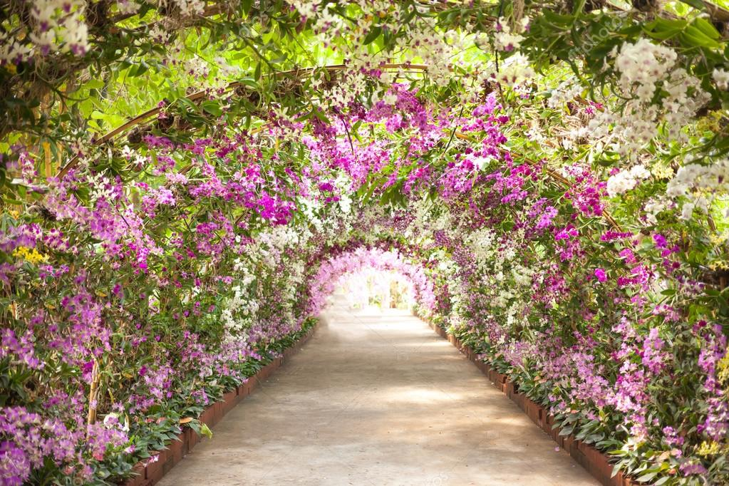 footpath in a botanical garden with orchids lining the path