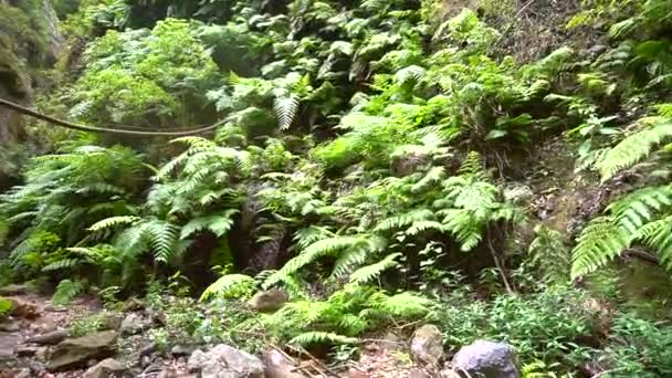 The great vegetation of the Los Tilos natural park trail on the northeast coast of the island of La Palma, Canary Islands. Spain