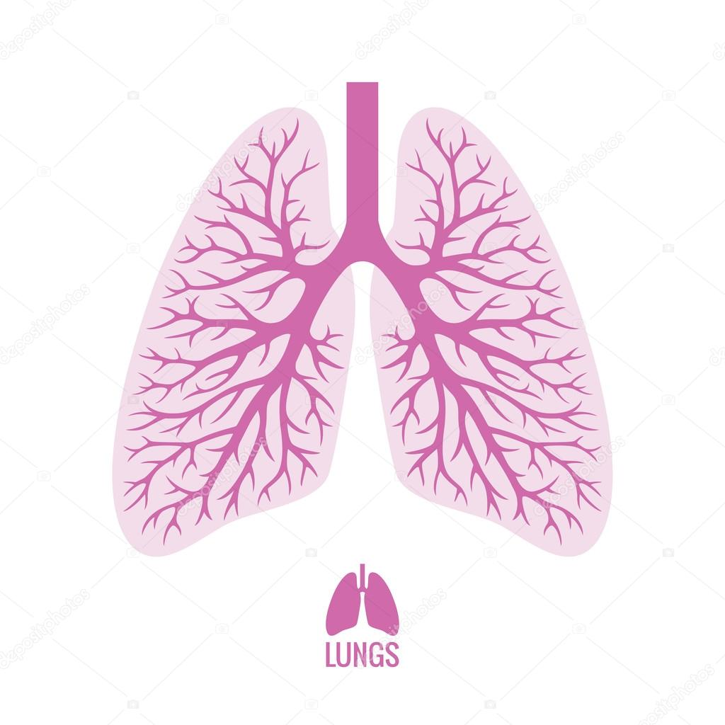 Human Lungs with Bronchial Tree — Stock Vector © maglyvi #68112573