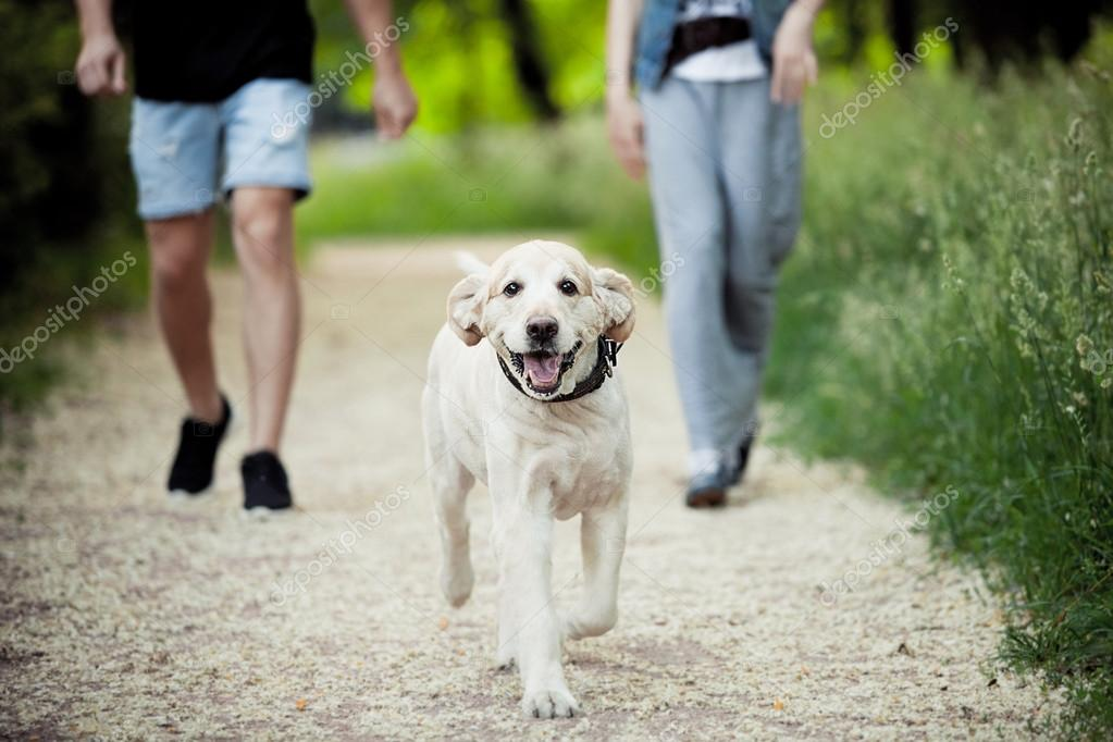 beautiful dog for a walk in the park runs