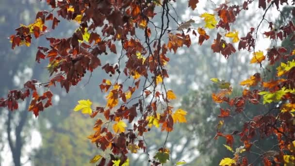Colorful red and yellow leaves on tree branch