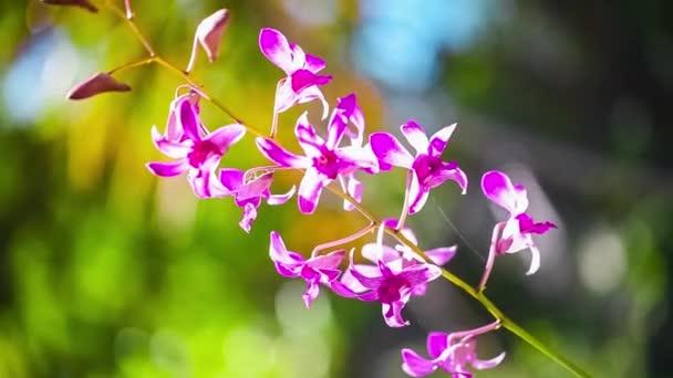 Gyönyörű piros orchidea integetett a szél.