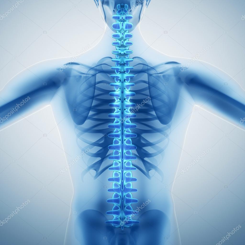 Columna vertebral humana — Foto de stock © iLexx #60123969