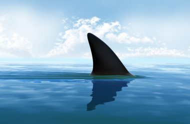 Shark fin above water