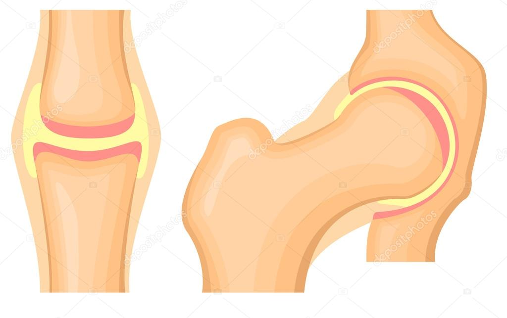 Hip Joint Structure Stock Vector Ilexx 94137204