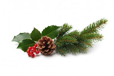 holly berries and pine cone