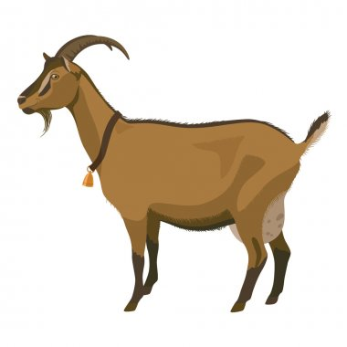 Brown goat, side view, isolated