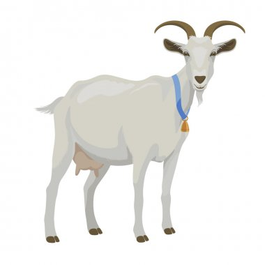 White goat, side view, isolated