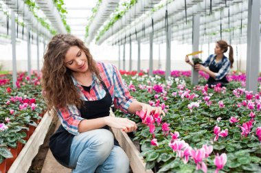 Florists women working with flowers in a greenhouse.