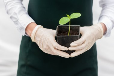 Portrait of a young researcher technician woman in greenhouse,in uniform and seedling pot in her hand. Food production.