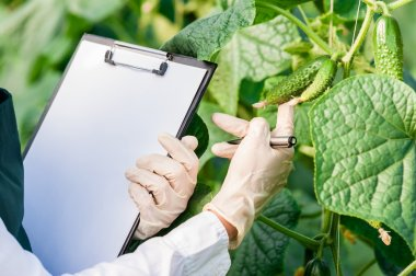 Biotechnology woman engineer with a clipboard and pen examining plant leafs for disease!