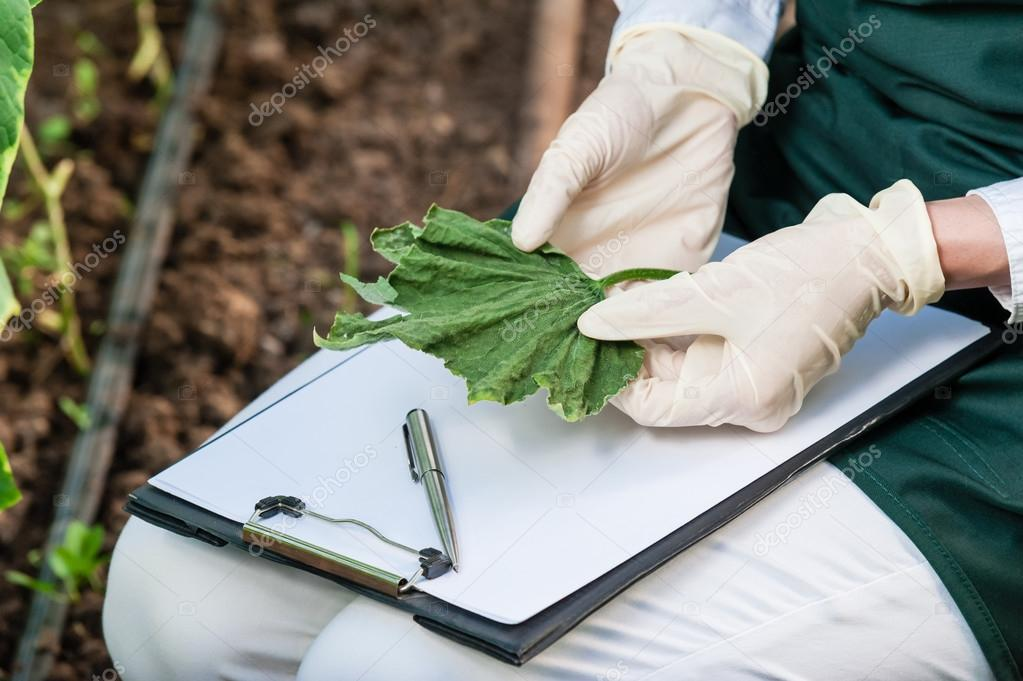 Biotechnology woman engineer with a clipboard and pen examining plant leaf for disease!