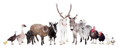 Group of farm animals on white