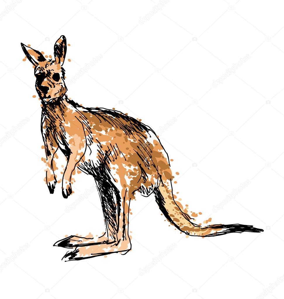 Dibujo de un canguro coloreado a mano — Vector de stock © onot ...