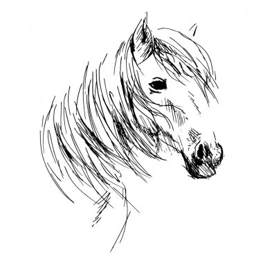 Hand drawing horse head