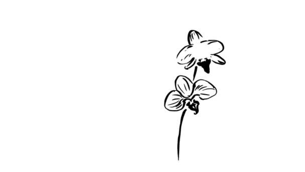 náčrt květin