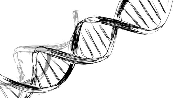 Animation Drawing Of Dna