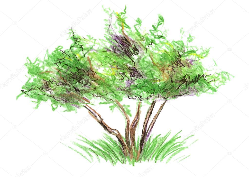 árbol Del Color De Dibujo Archivo Imágenes Vectoriales Onot