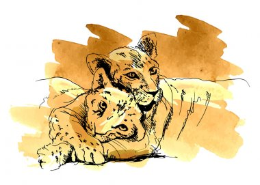 Colored hand sketch lioness with cub