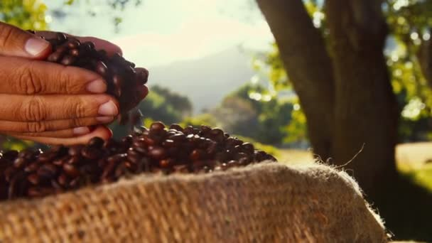 Hand of Farmer checking coffee beans