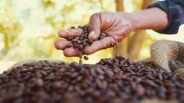 Farmář, kontrola kvality kávová zrna