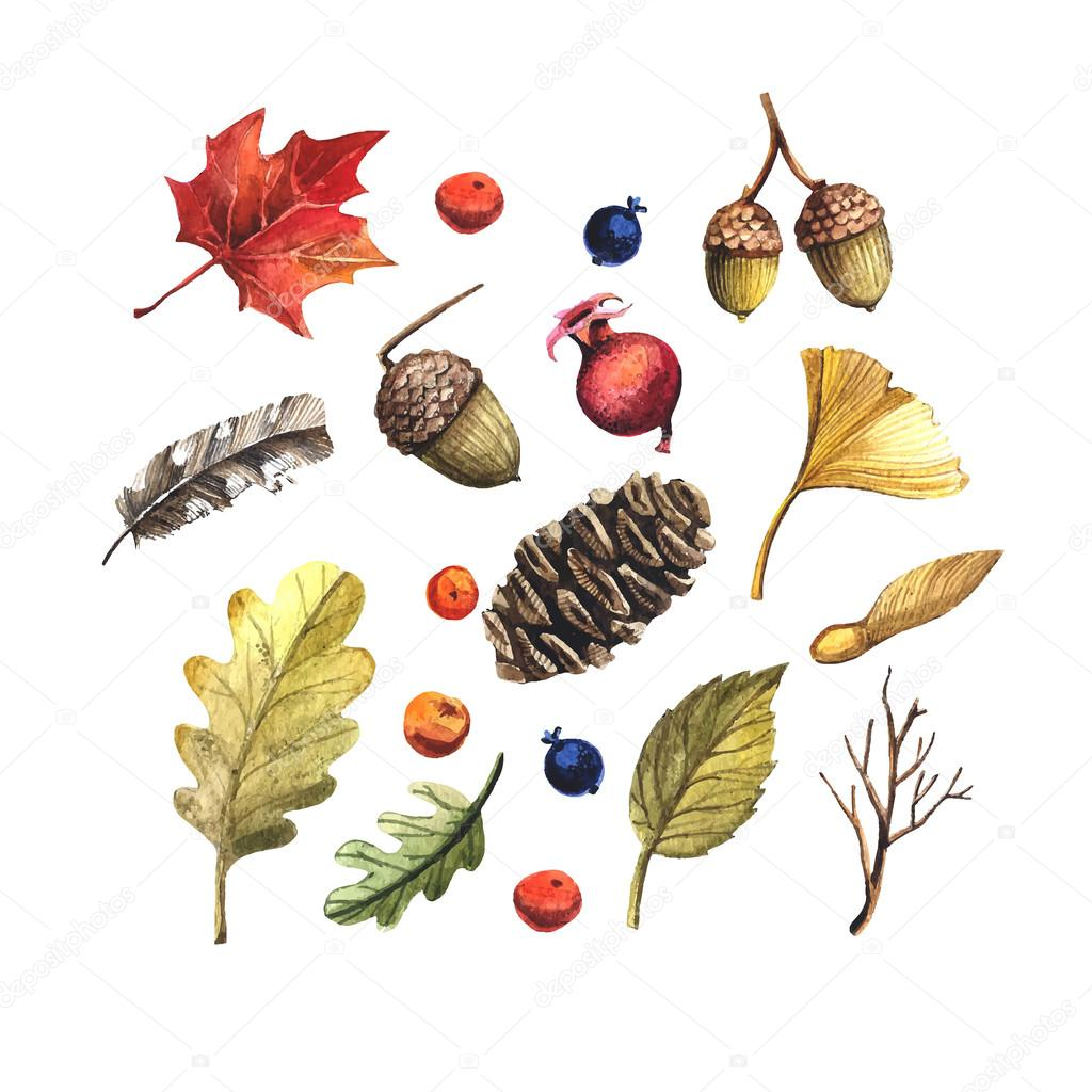 Leaves, pine cones, acorns and berries