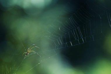 Spider macro shot on the net.