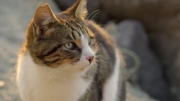 Záběry zatoulané kočky s uříznutým uchem.