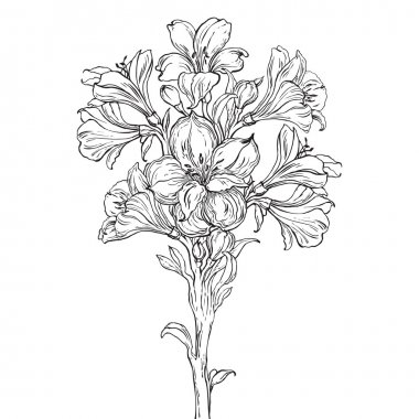 Graphic drawing of orchid flower