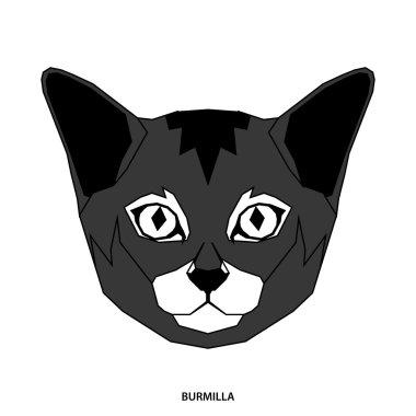 Cat breed, vector illustration