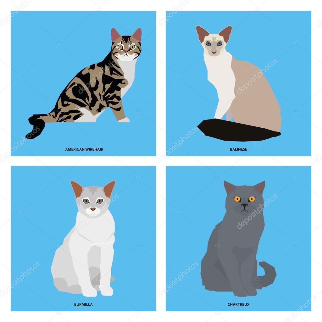 Set of cat breeds, vector illustration — Stock Vector ...