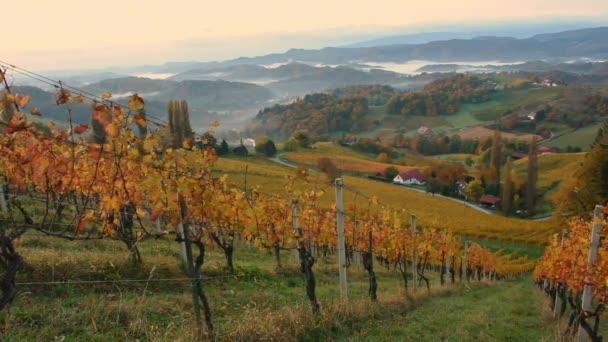Ősz Dél-Stájerország szőlőültetvényein, Osztrák Toszkánában, Ausztria és Szlovénia határán fekvő bájos régióban, gördülő dombokkal, festői falvakkal és borospincékkel, napkeltekor.
