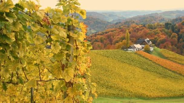 Herbst in den südsteirischen Weinbergen, bekannt als österreichische Toskana, einer reizvollen Region an der Grenze zwischen Österreich und Slowenien mit sanften Hügeln, malerischen Dörfern und Weinstuben, bei Sonnenaufgang.