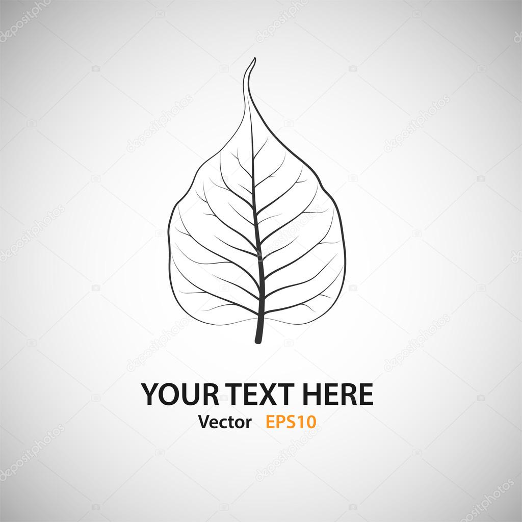 White Bodhi Leaf - vector