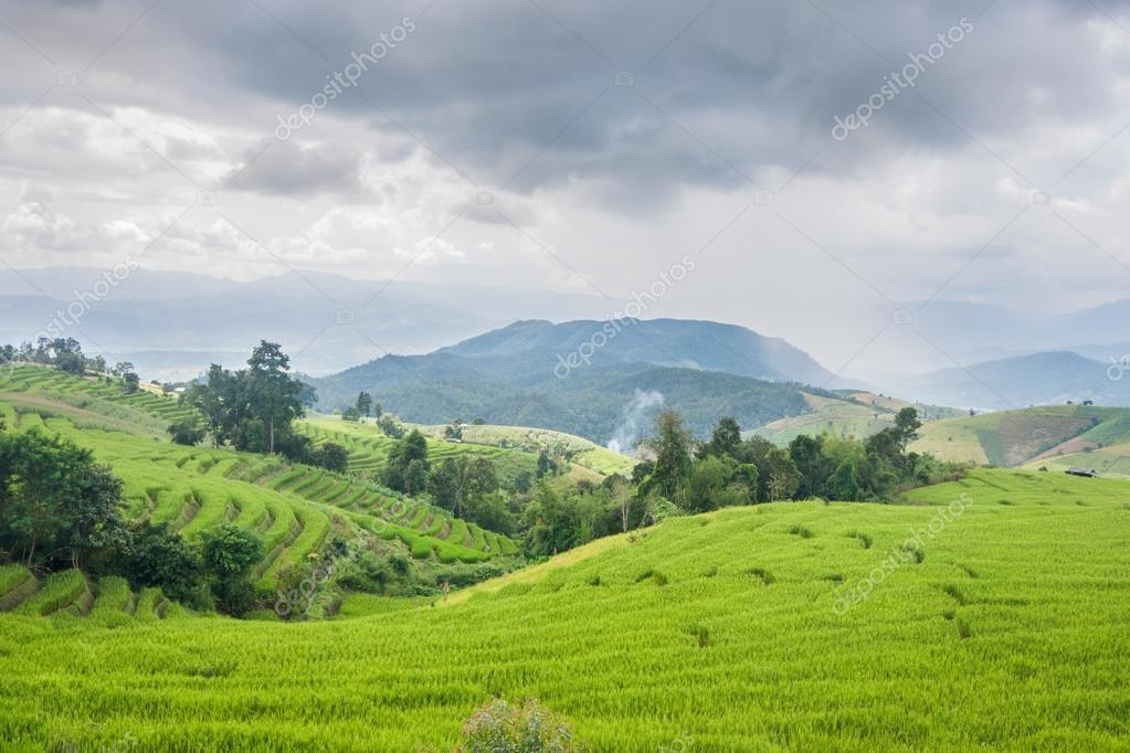 Terraza De Campo Hermoso Arroz Verde Con Nube De Lluvia Y La