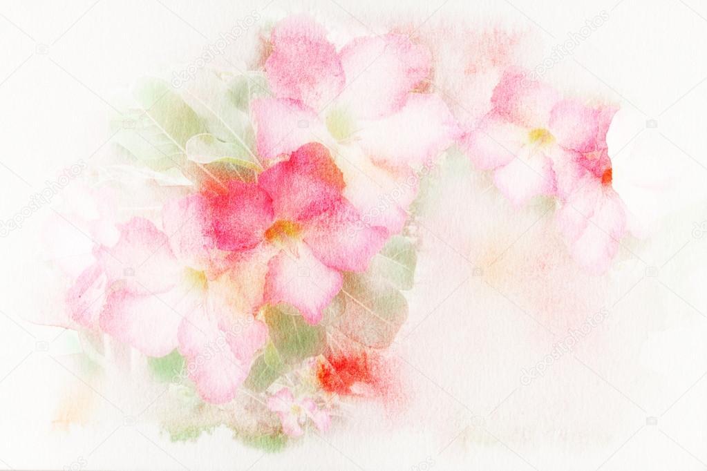 Flower (Desert Rose, Impala Lily, Mock Azalea) watercolor illustration.
