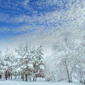 Verschneite Waldstraße, Winterlandschaft. kalte und verschneite Winterstraße mit blauen Evergreens und grauem bewölkten Himmel. Weihnachts- und Neujahrsbaum.