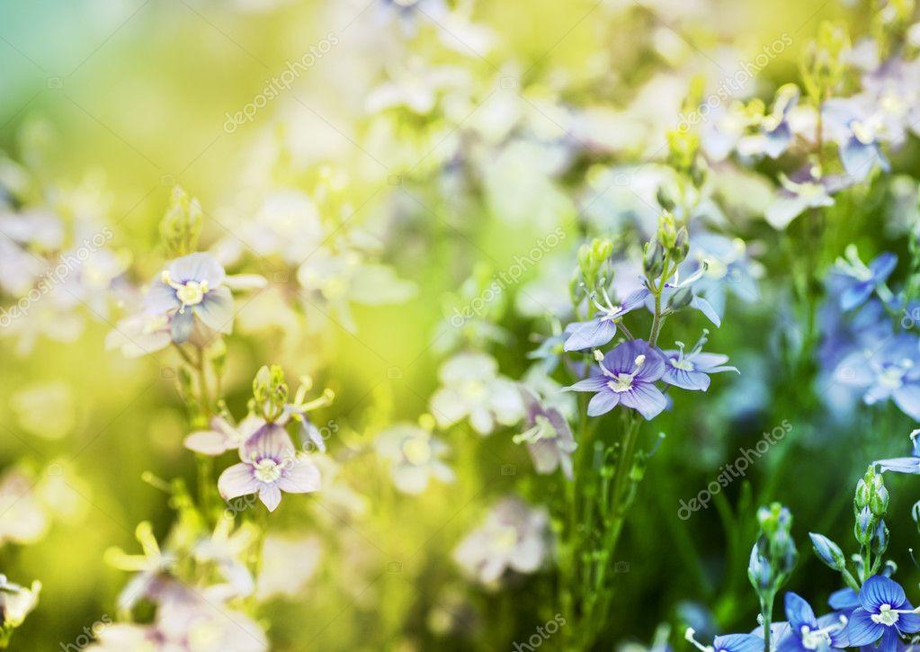 Красивые Светло Фиолетовые Цветы Лугу Солнечный День ...