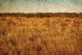 Přírodní krajina s oblohou a trávy