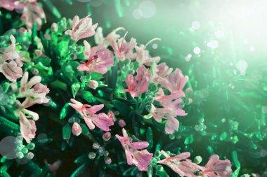 Little beautiful pink flowers