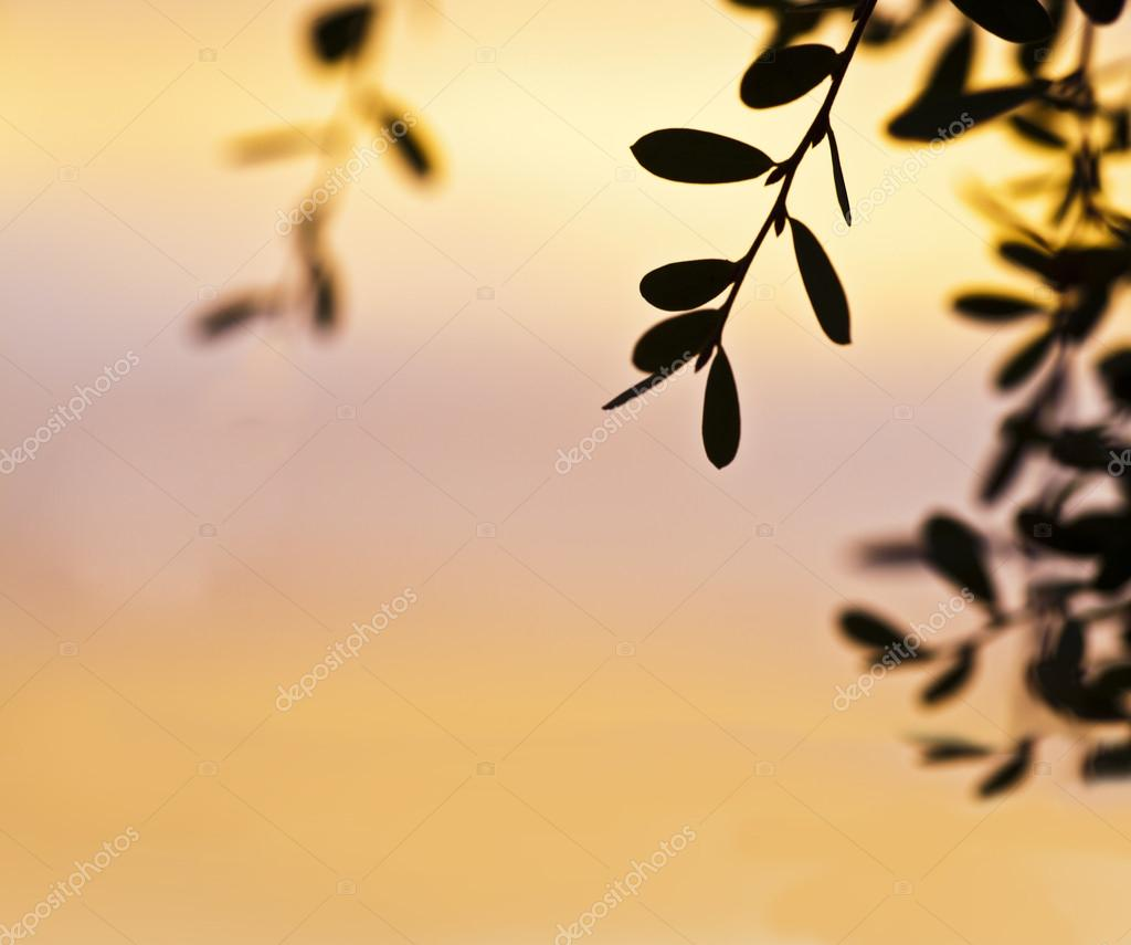 Branches with little leaves