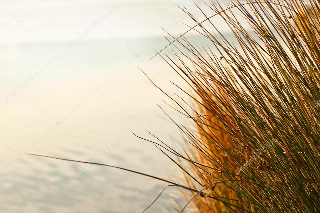 Autumn dry grass