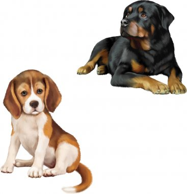 Rottweiler dog and beagle puppy