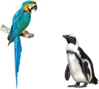 Gentoo penguin and blue parrot macaw