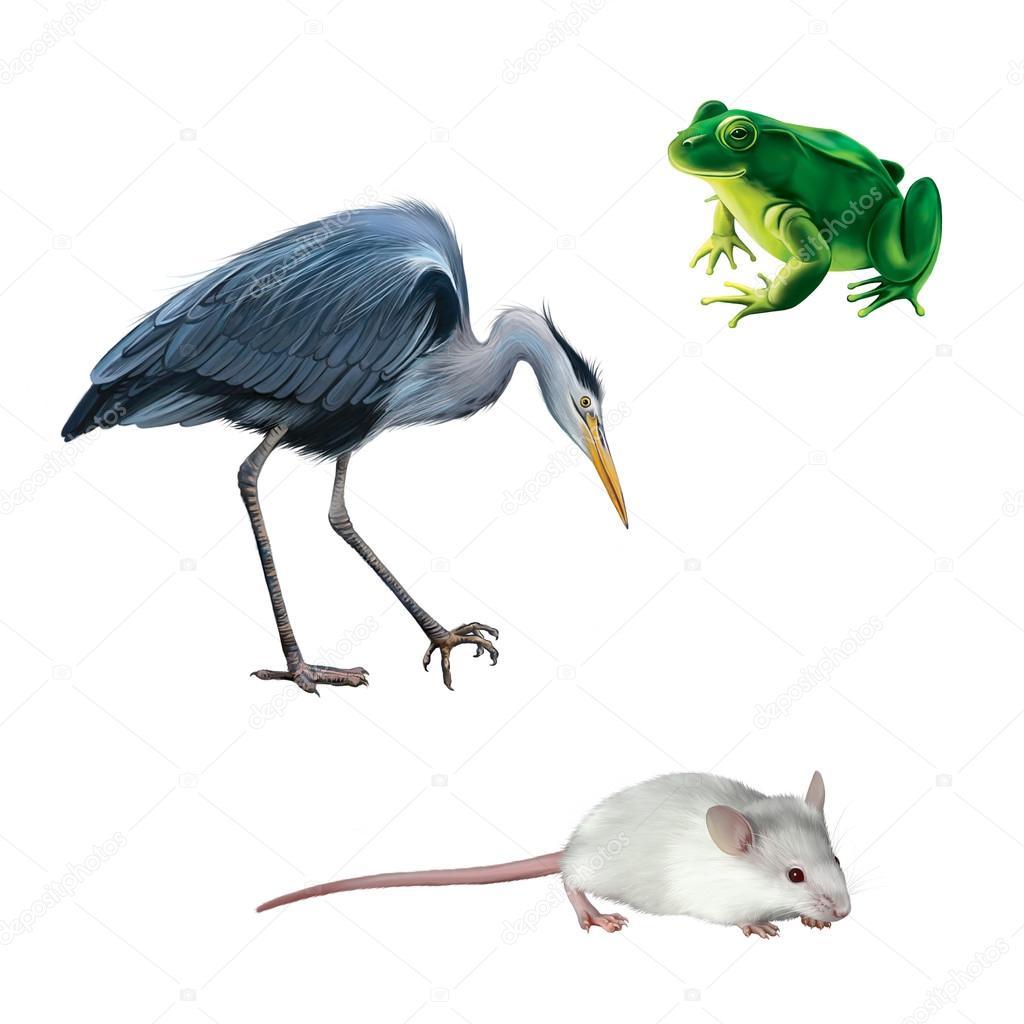 Como cazar un raton finest decoration como cazar ratones como cazar ratones imagenes decoracion - Como cazar ratones ...
