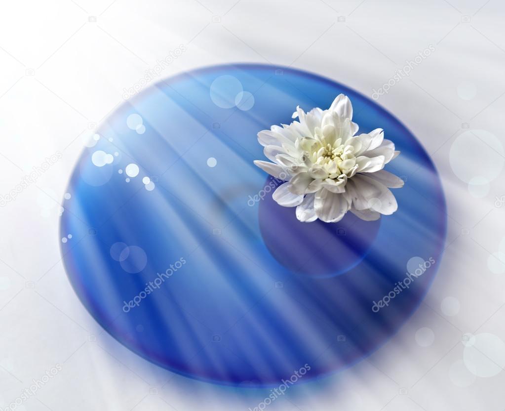 Flor blanca en el brillo del sol — Fotos de Stock © artnature  66008069 8ab1d6d1ee8