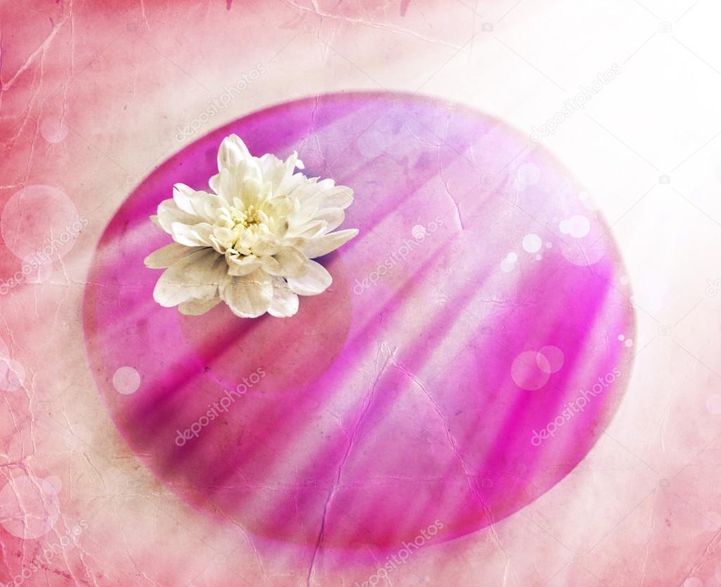 Flor blanca en el brillo del sol — Foto de stock © artnature  66008161 c2c6ce51aa7