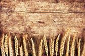 Fotografie klásky pšenice na stole