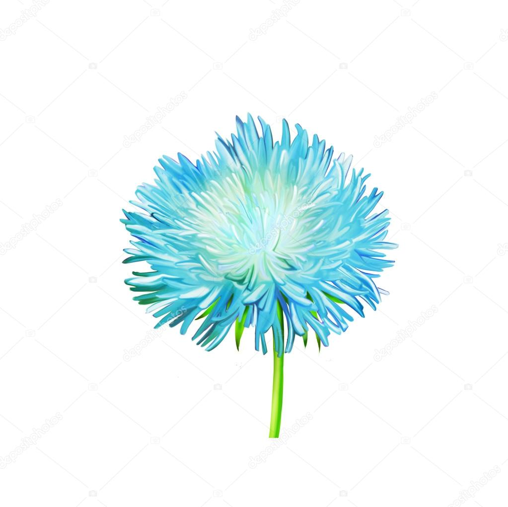 Blue Aster Flower Stock Photo Artnature 66086699
