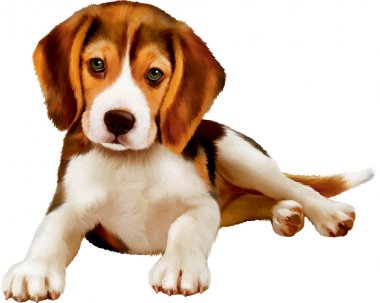 Cute beagle puppy